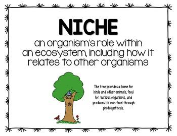 Niche Science