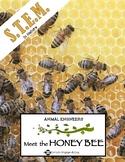 Animal Engineers: Meet the Honey Bee STEM STREAM STEAM Challenge