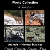 ANIMALS (horse, deer, sheep): Photos