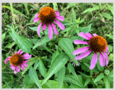 STOCK PHOTOGRAPHY - Summer Wildflowers And Plants (Eastern