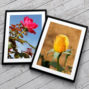 STOCK PHOTOS: 10 Flowers Themed Photos [Personal & Commercial Use]