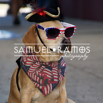 STOCK PHOTOS: American Patriotic Dog  [Personal & Commercial Use]