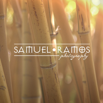 STOCK PHOTOS: Background: Bamboo [Personal & Commercial Use]