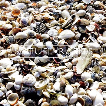 STOCK PHOTOS: Background: Beach Seashells [Personal & Commercial Use]
