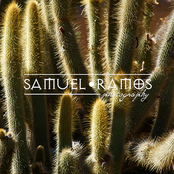 STOCK PHOTOS: Background: Desert Cactus Plants  [Personal & Commercial Use]