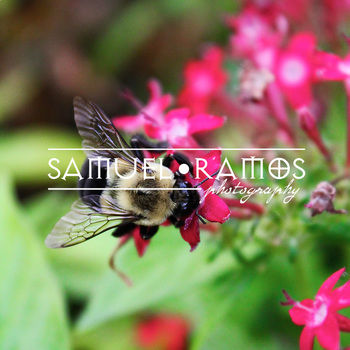 STOCK PHOTOS: Bee on Flower [Personal & Commercial Use]