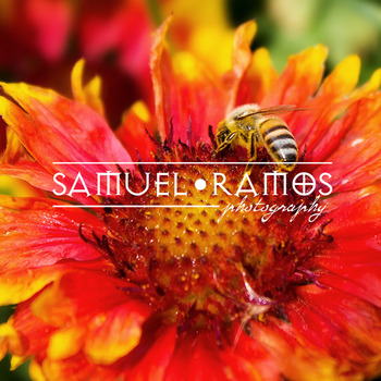 STOCK PHOTOS: Bee on Garden Flower [Personal & Commercial Use]