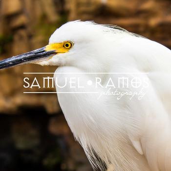 STOCK PHOTOS: California Seabird [Personal & Commercial Use]