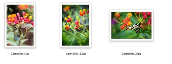 STOCK PHOTOS: Caterpillar - 3 Pack [Personal & Commercial Use]