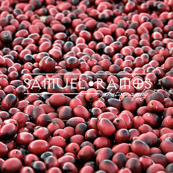 STOCK PHOTOS: Cranberries [Personal & Commercial Use]