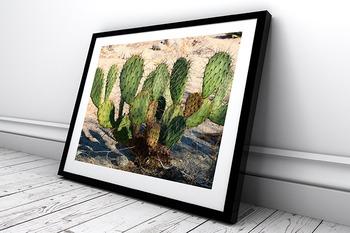 STOCK PHOTOS: Desert Plants - 21 Photos & Slideshow [Personal & Commercial Use]