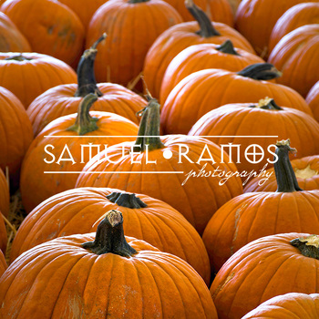 STOCK PHOTOS: Fall October Pumpkin Patch **FREEBIE** [Personal & Commercial Use]
