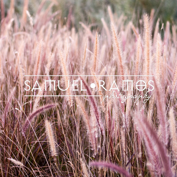 STOCK PHOTOS: Field of Garden Grass [Personal & Commercial Use]