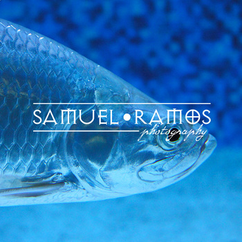STOCK PHOTOS: Fish [Personal & Commercial Use]