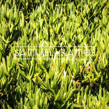 STOCK PHOTOS: Ice Plants [Personal & Commercial Use]