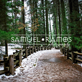 STOCK PHOTOS: Path in the Forest [Personal & Commercial Use]