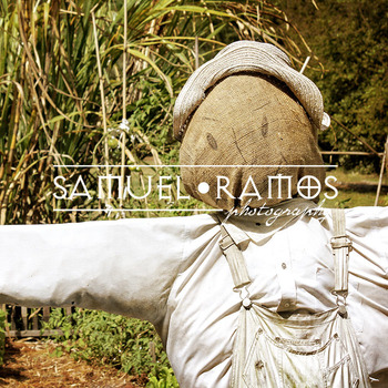 STOCK PHOTOS: Scarecrow [Personal & Commercial Use]