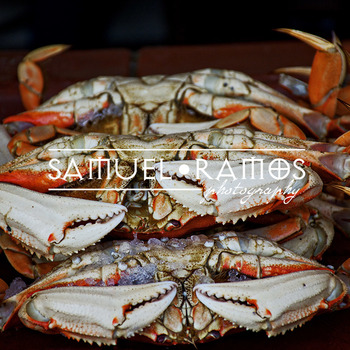 STOCK PHOTOS: Sea Crab [Personal & Commercial Use]