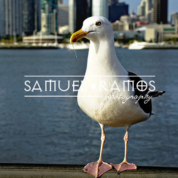 STOCK PHOTOS: Seagull [Personal & Commercial Use]