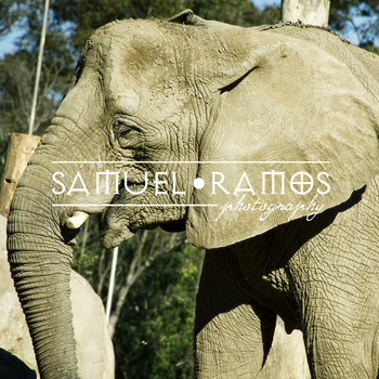 STOCK PHOTOS: The Elephant [Personal & Commercial Use]