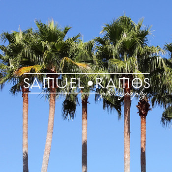 STOCK PHOTOS: Tropical Palm Trees [Personal & Commercial Use]