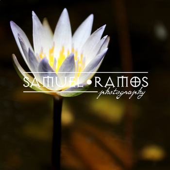STOCK PHOTOS: Water Lily Flower [Personal & Commercial Use]