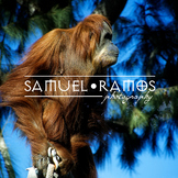 STOCK PHOTOS: Zoo Animal— Orangutan [Personal & Commercial Use]