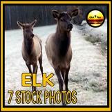 STOCK PHOTOS of Elk Set Two