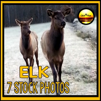 Stock Photos ELK for Commercial Use