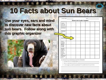 SUN BEAR: 10 facts, engaging PPT, links, free graphic organizer)