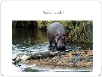 Safari Adventure Powerpoint