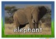Safari African Animals Photos/ Pictures for Display/ Posters Science