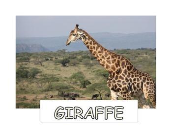 Safari Animal Concept Cards