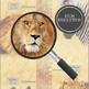 Safari Animal Height Chart