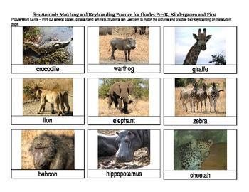 Safari Animals Matching and Keyboarding Practice