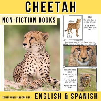 Safari Animals Non-Fiction Spanish Readers - El Guepardo (The Cheetah)