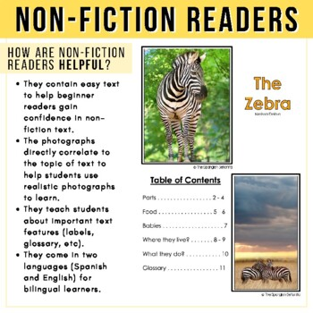 Safari Animals Non-Fiction Spanish Readers - La Cebra (The Zebra)