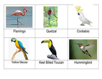 Safari Exotic Birds Toob Matchup cards