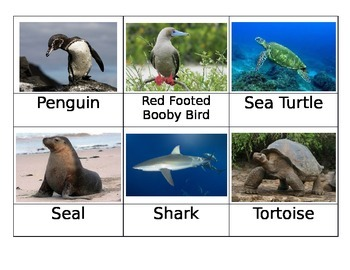 Safari Galapagos Toob Matchup Cards