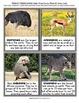 Safari Life - Week 14 Age 4 Preschool Homeschool Curriculum by Home CEO