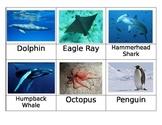 Safari Oceans Toob Matchup Cards
