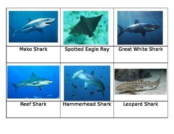 Safari Sharks Toob Matchup Cards