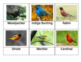 Safari Toob Backyard Birds matchup cards
