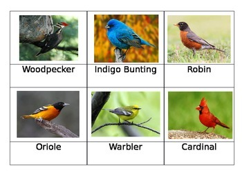 Safari Toob Backyard Birds matchup cards