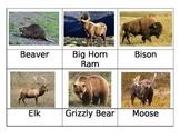 Safari Toob North American Wildlife Matchup Cards