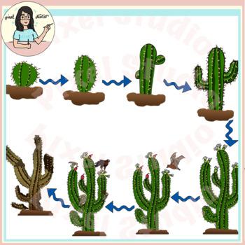 Saguaro Cactus Life Cycle Clipart