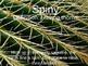 Saguaro Vocabulary Powerpoint