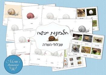 Snail - Montessori Hebrew + GAMES