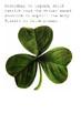 Saint Patricks Day Crossword