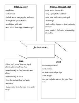Salamander Information Writing Web